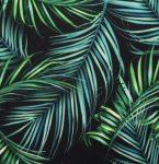 Black Palm Leaves Swim